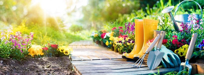 Arrosage des plantes et du potager